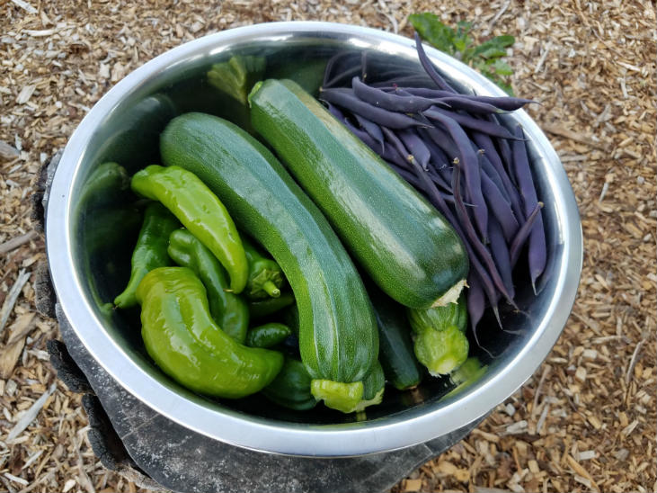 Don't wait to grow more food as a beginner gardener