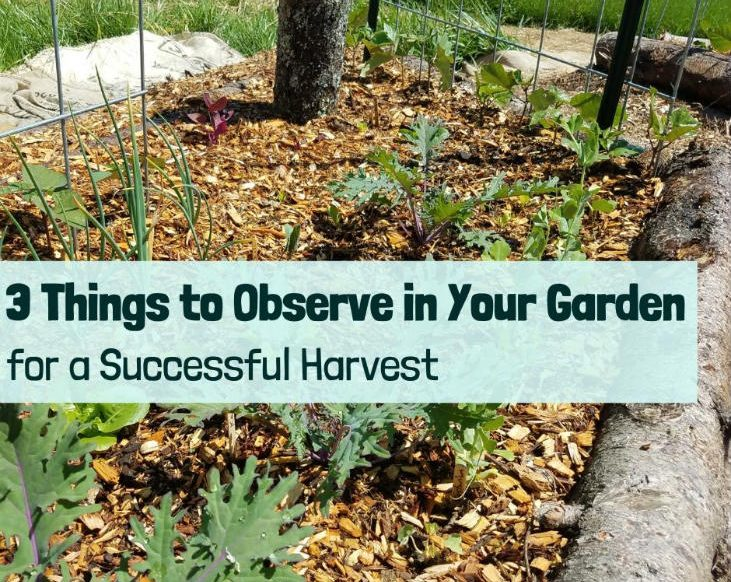 Time to observe your garden