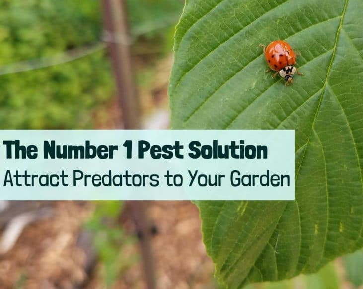 Deal with pests by attracting predators to your garden