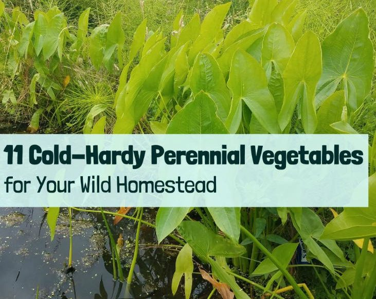 Grow cold-hardy perennial vegetables