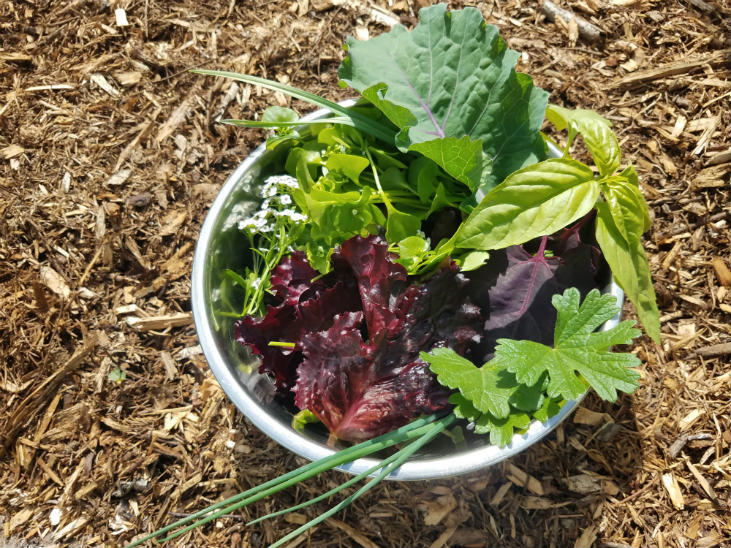 Sorrel is a great addition to a mixed salad