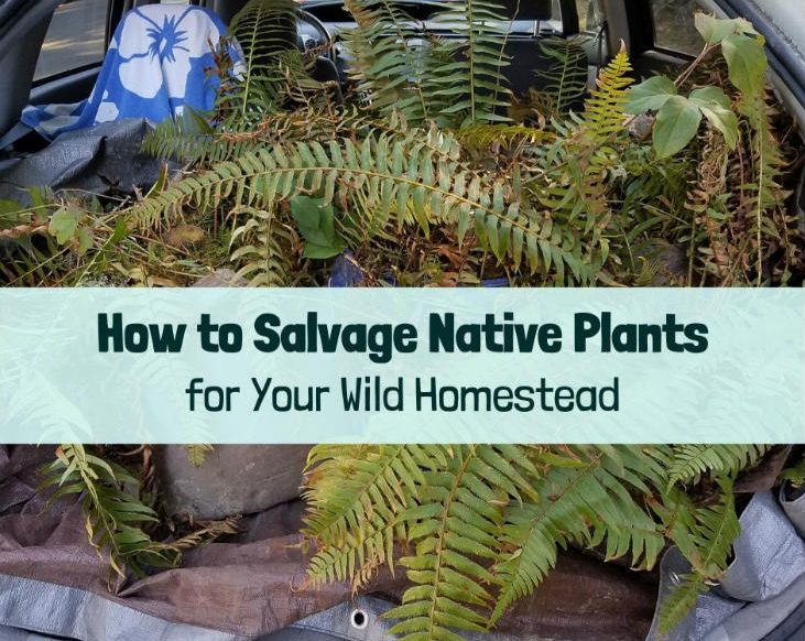 Time to salvage native plants