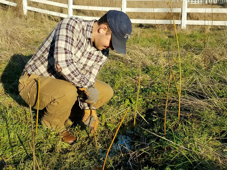 Livestakes are a great way to salvage native plants