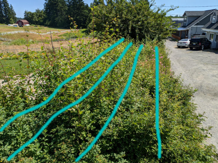 When you start a hedgerow use planting rows while planning
