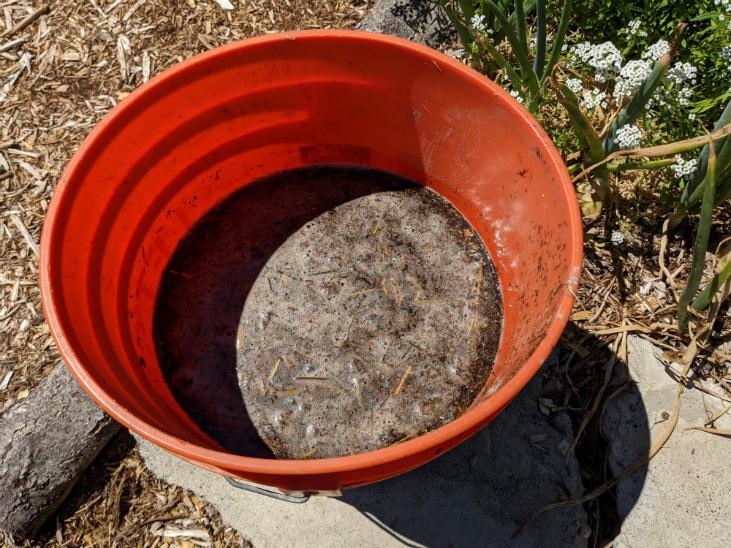 Add nitrogen to your garden soil with manure tea