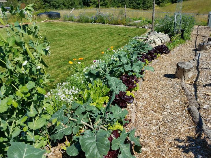 Support soil life to add nitrogen to your garden soil