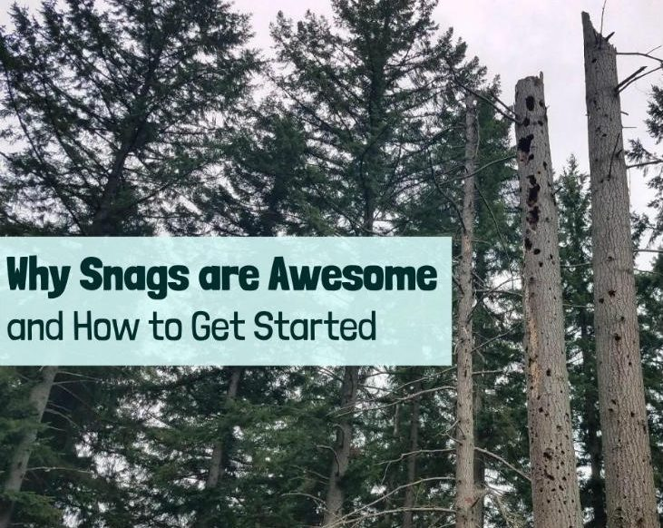 Time to get started with snags