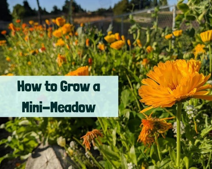 Grow a mini-meadow