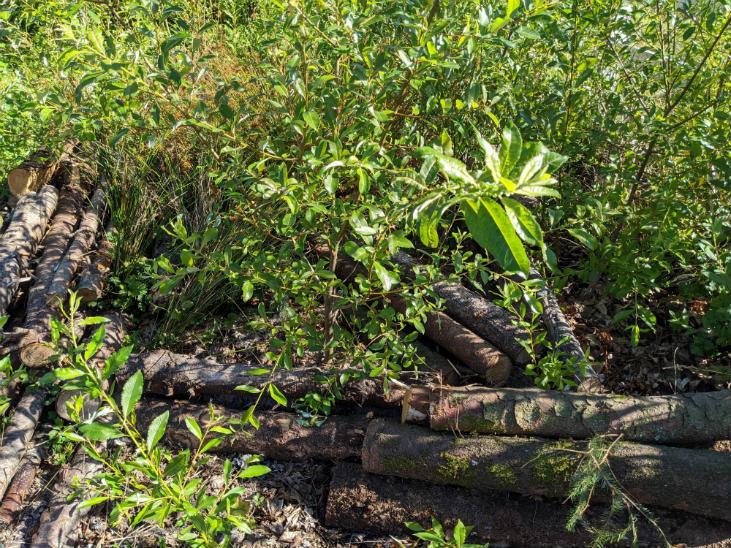 Restore wetlands with habitat features