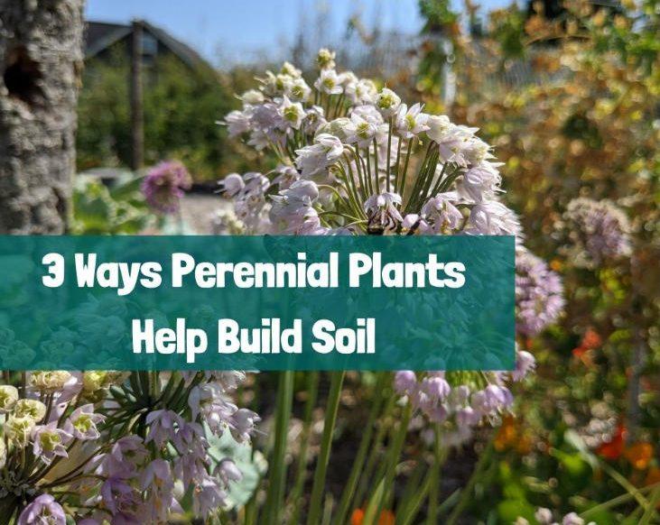 How perennial plants help build soil