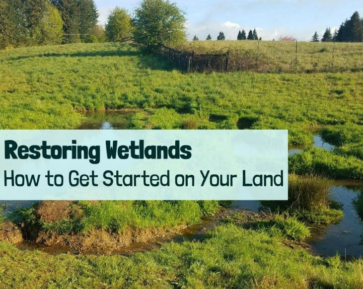 Restoring wetlands and how to get started
