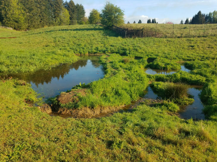 Adding complexity is a great method for restoring wetlands