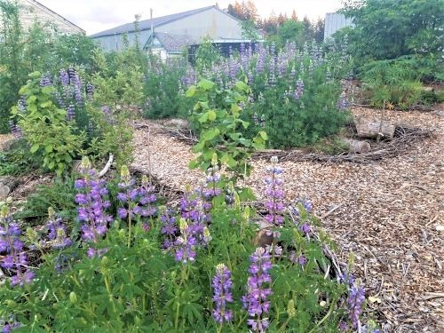 Grow perennial foods in a food forest