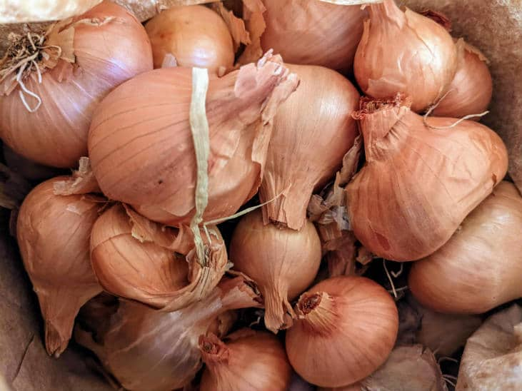 Try growing perennial onions like potato onions