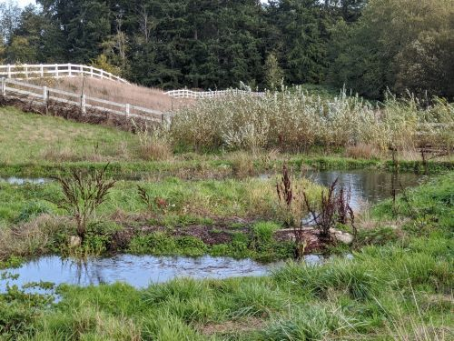Work with your land by transforming wet areas for wildlife