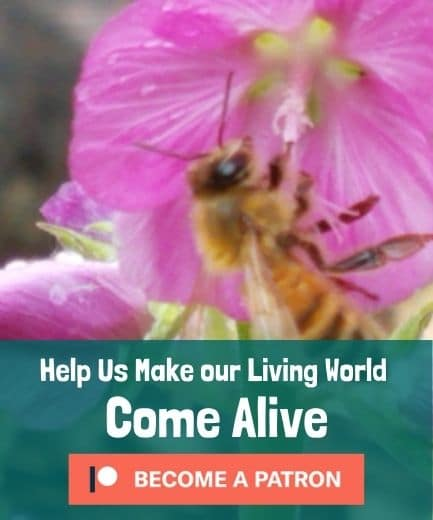 Help Us Make our Living World Come Alive - Become a Patron